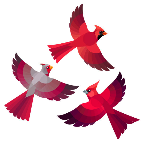 Best Cardinal Flying Illustrations, Royalty.