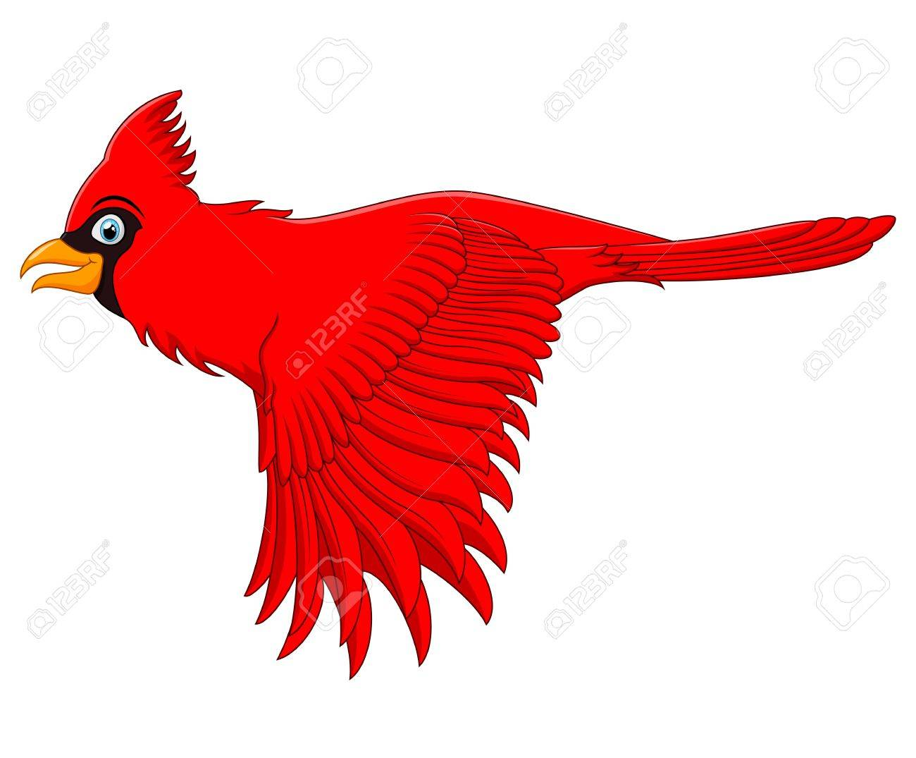 flying cardinal bird.