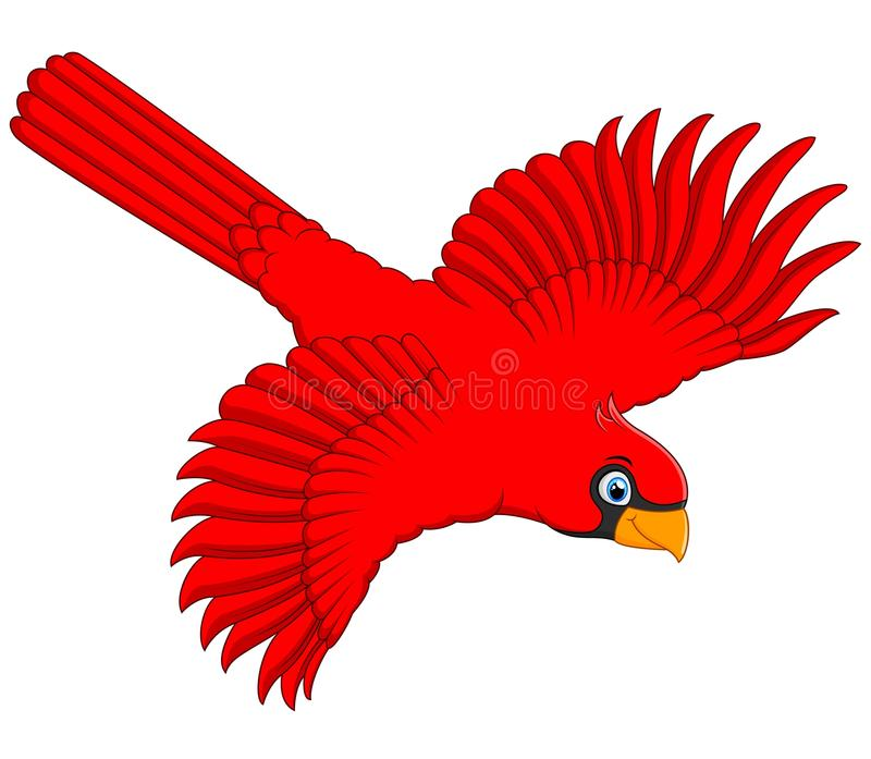 Flying Cardinal Stock Illustrations.