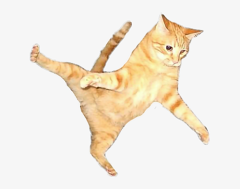 Flying Cat Png.
