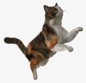 Flying Cat PNG, Free HD Flying Cat Transparent Image.