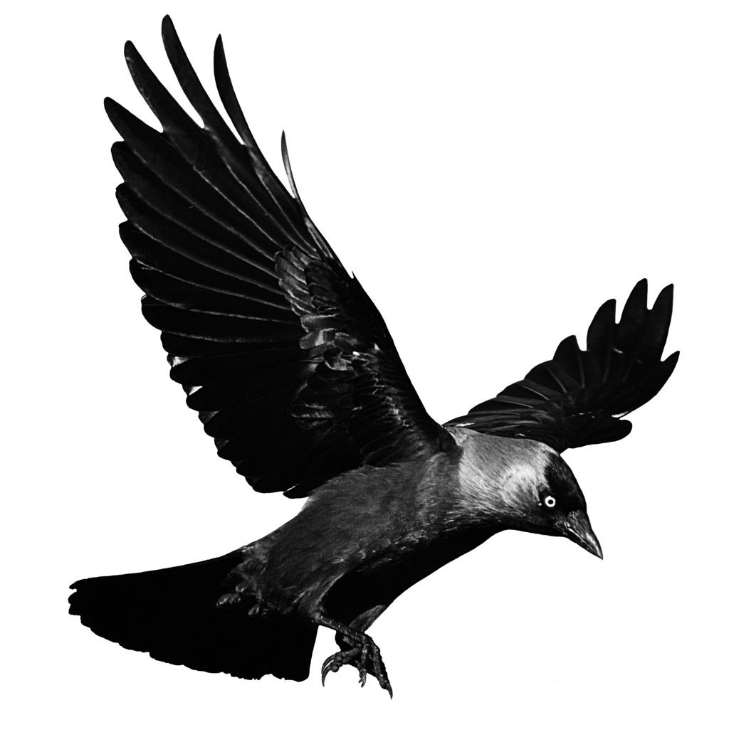 Crows Flight Clip art.