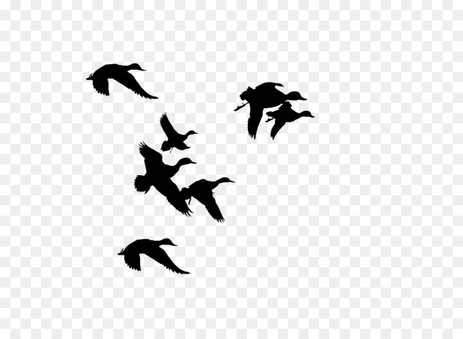 Duck Flight Mallard Clip art.