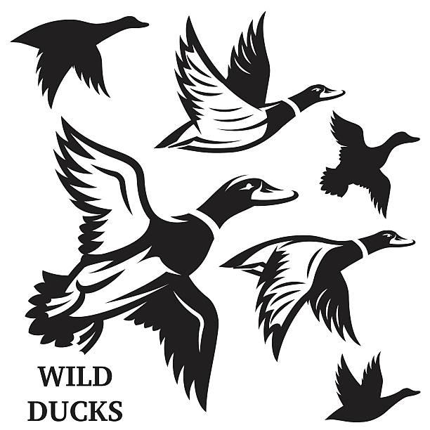 Flying ducks clipart » Clipart Station.