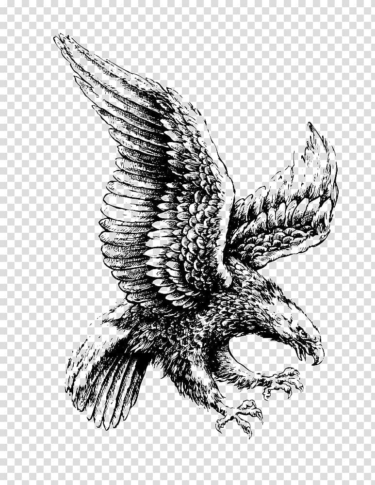 Eagle , Bald Eagle Drawing Illustration, Flying eagle.