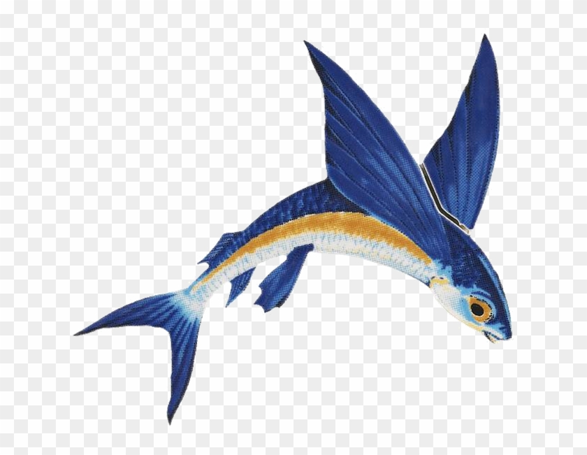 Barbados Flying Fish Png, Transparent Png (#13961), Free Download on.