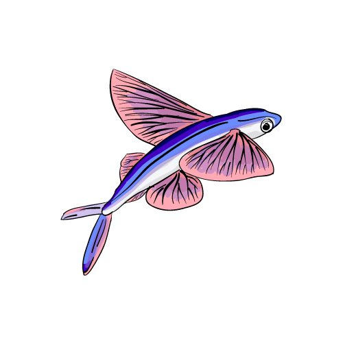 File:Flying Fish.png.