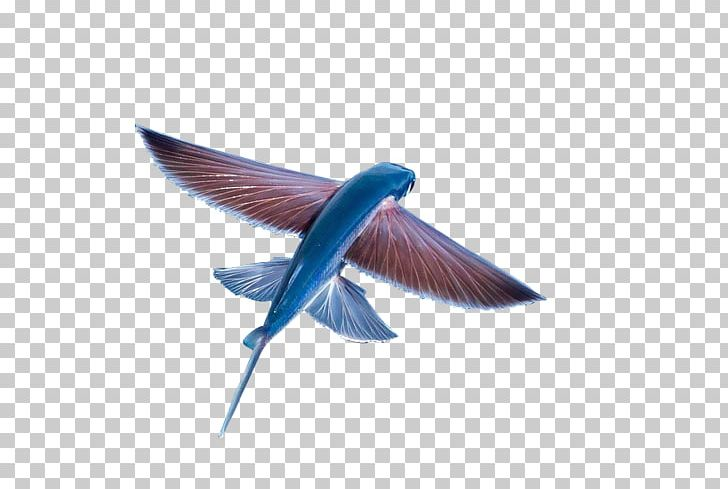 Flight Flying Fish PNG, Clipart, Animals, Aquarium Fish, Beak, Bird.