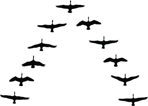 Clipart geese flying in formation.