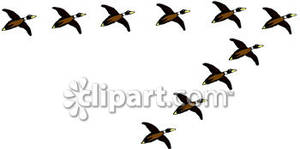 Flock of Ducks Flying In a V Formation.