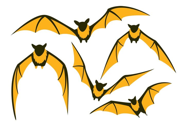 Flying Fox Vector Bat Pack.