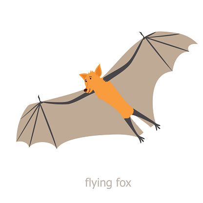 Flying Fox Clip Art, Vector Images & Illustrations.