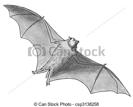 Stock Illustration of Flying Fox Bat.