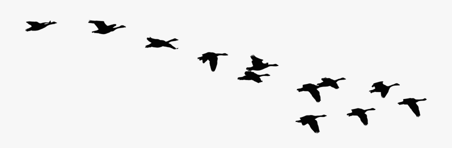 Flock Of Flying Geese Silhouette Icons Png.