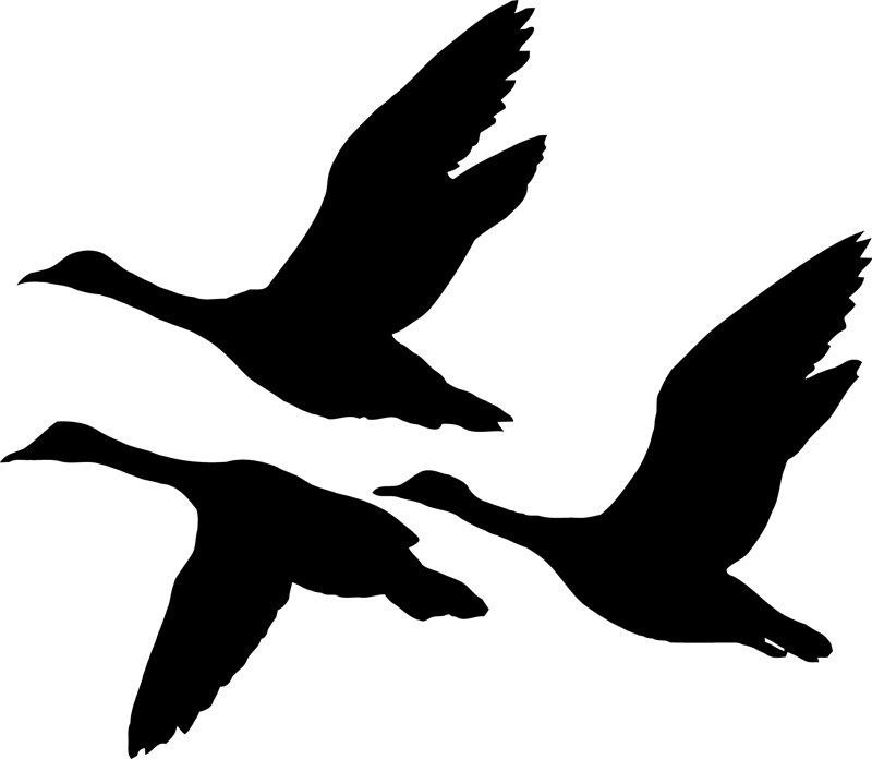Duck Illustration Vector graphics Silhouette Stock.