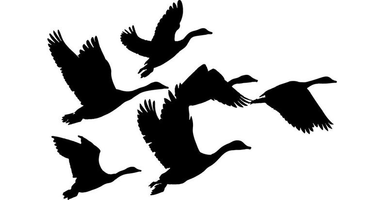 Flying Goose Vector at Vectorified.com.