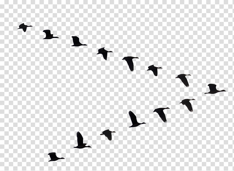 flock of flying geese silhouette illustration transparent.
