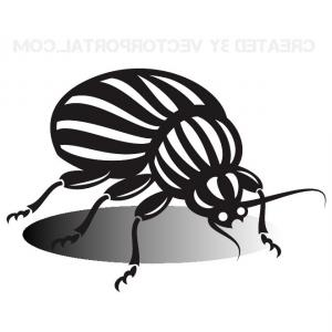 Exclusive Fly Bug Insect Clip Art Illustration.