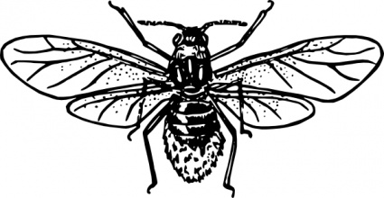 Outline Bug Fly Insect Aphid Free Vector.