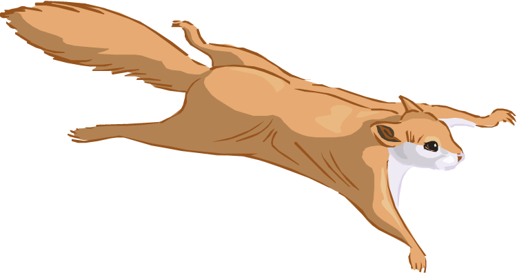 Flying Squirrel Clipart.
