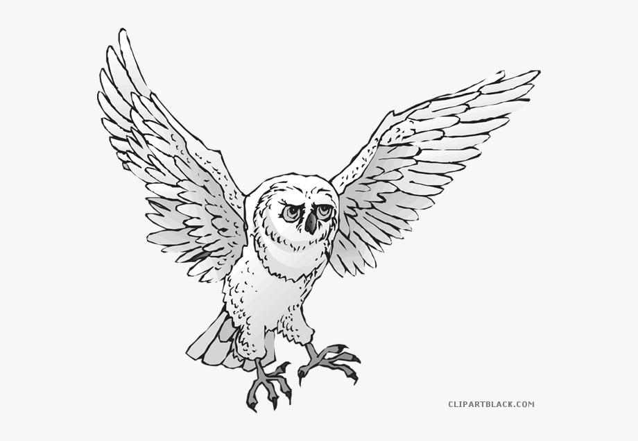 Snowy Owl Clipart Real Owl.