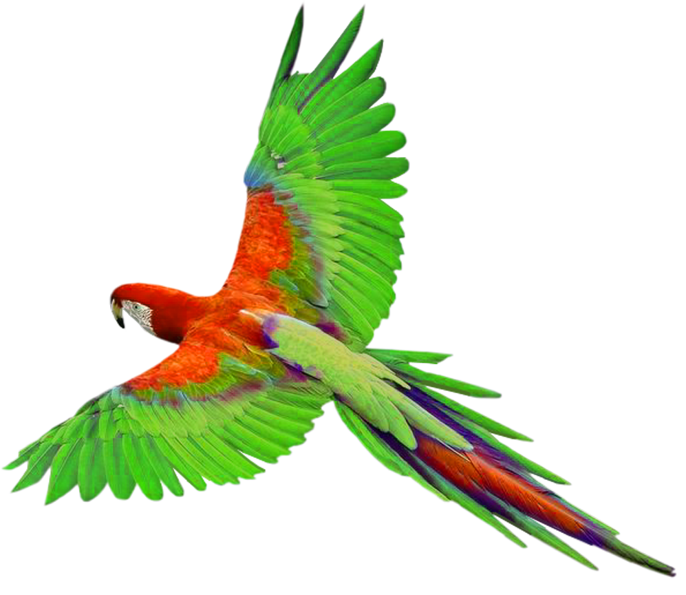Free Flying Parrot Png, Download Free Clip Art, Free Clip.