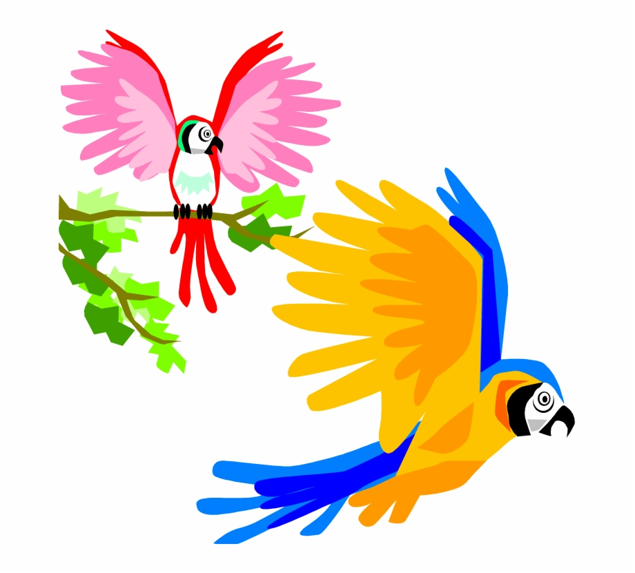 Parrot Clipart Colourful Parrot Colorful Birds Flying.
