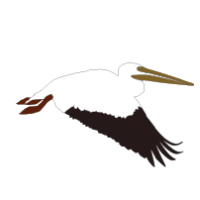 PELICAN CLIPART Archives.