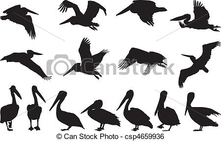 Pelican Stock Illustrations. 738 Pelican clip art images and.