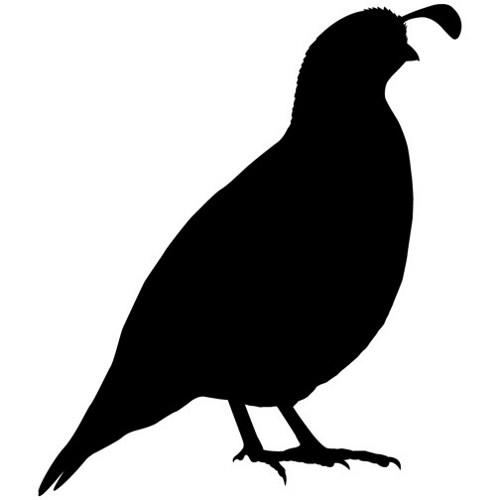 Flying quail clipart.