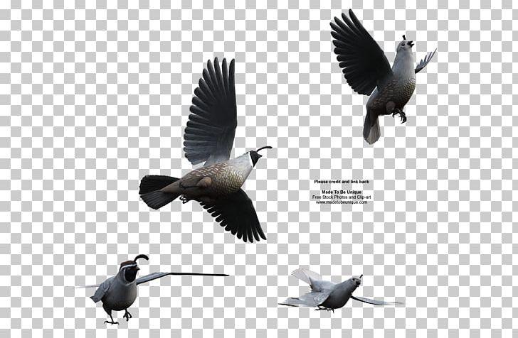 Bird California Quail Northern Bobwhite Flight PNG, Clipart.