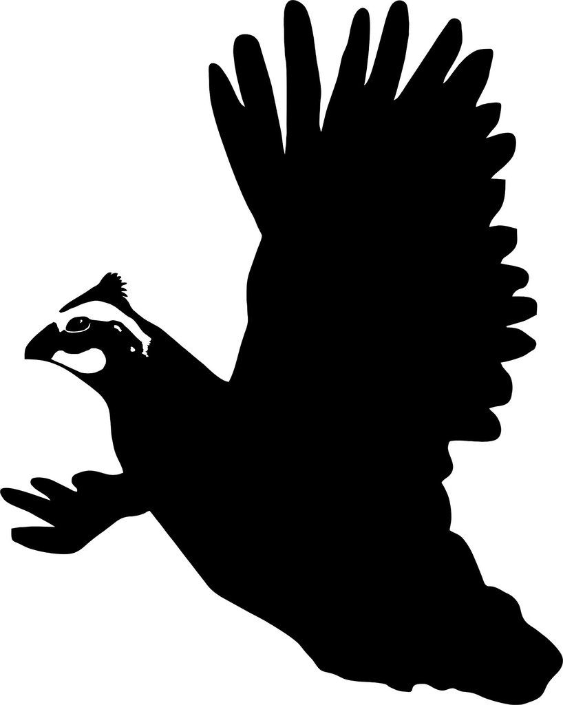 The best free Quail silhouette images. Download from 62 free.