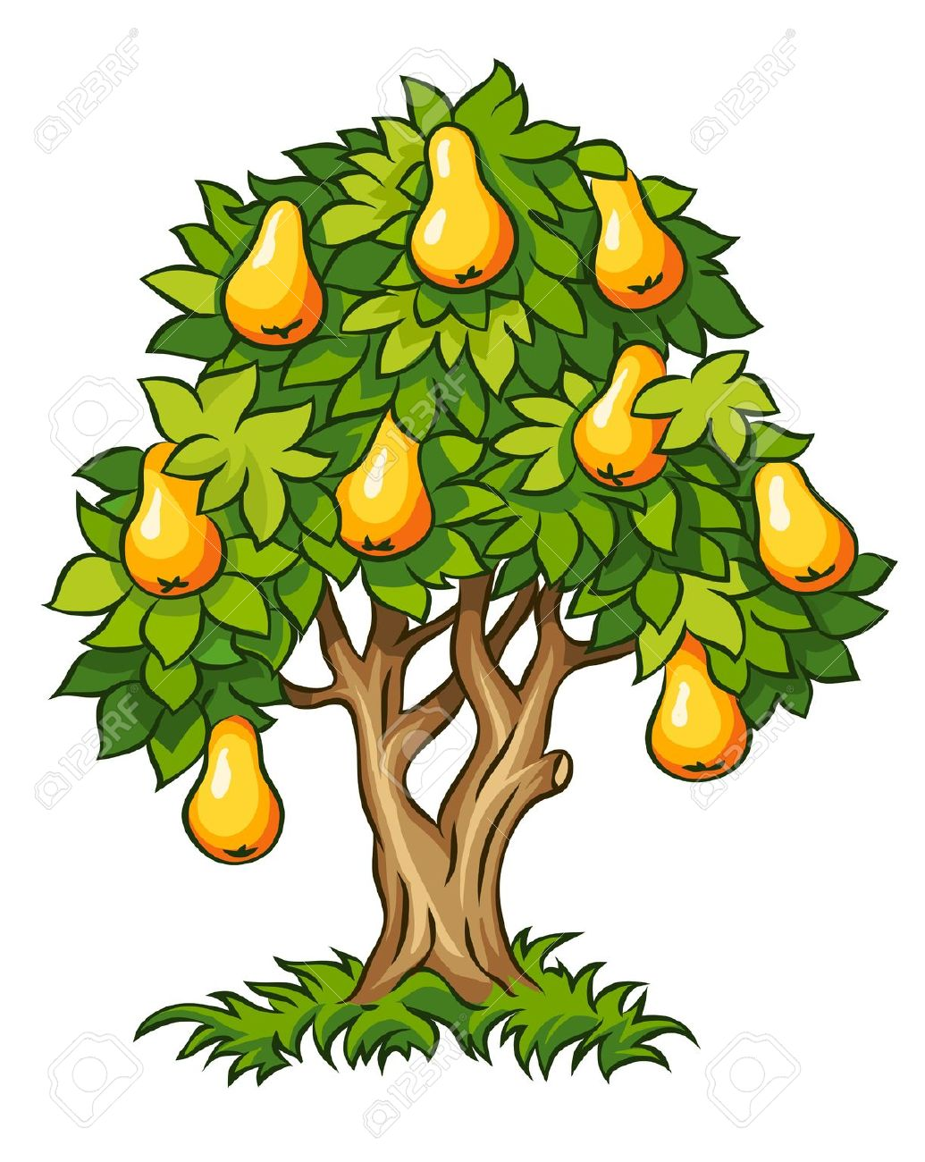 2,377 Pear Tree Stock Vector Illustration And Royalty Free Pear.