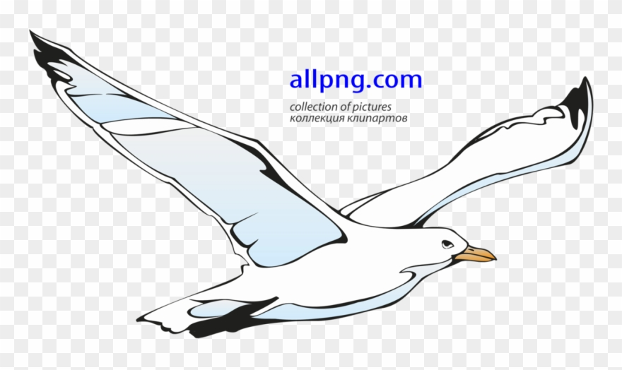 Flying Seagull Clipart.
