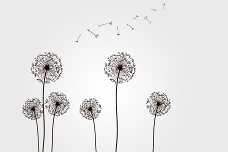Dandelions with Flying Seeds, Clip Art.