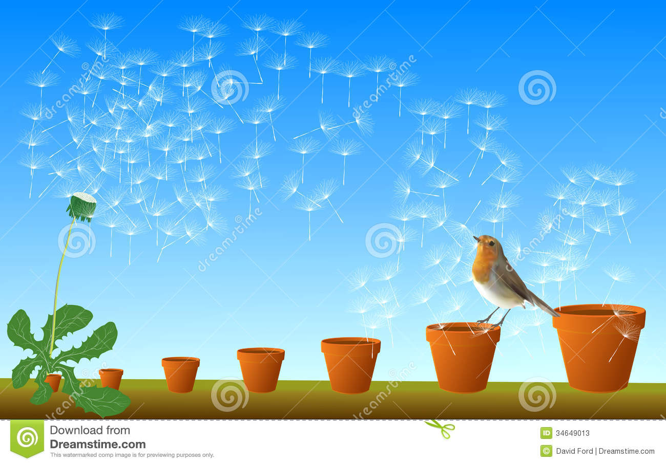Seed Dispersal Stock Illustrations.
