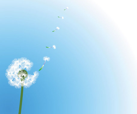 Dandelion Vector with Flying Seeds (Free), Cliparts.