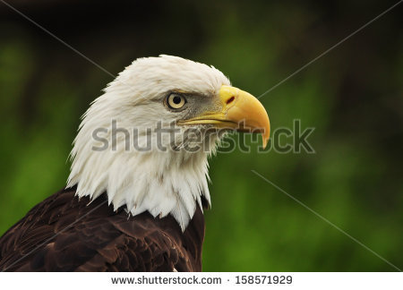 Eagle Flying Over Stock Photos, Royalty.