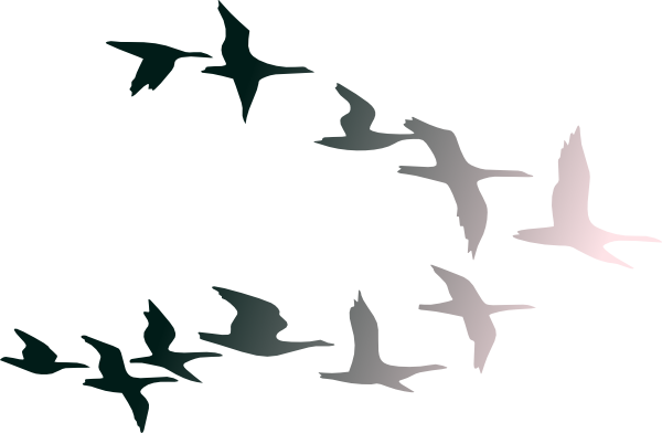 Bird flight Bird flight Clip art.