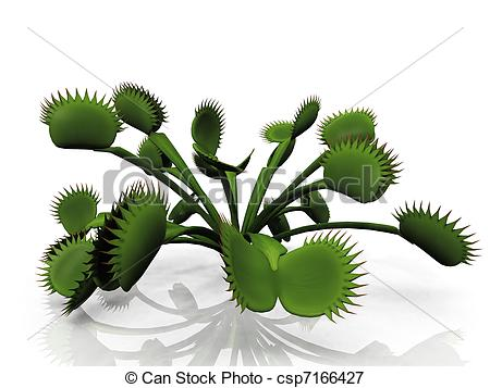 Stock Illustrations of Venus flytrap.