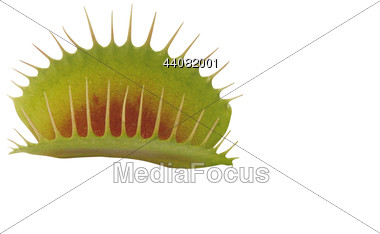 Stock Photo Venus Flytrap Clipart.