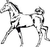 Foal Clip Art.