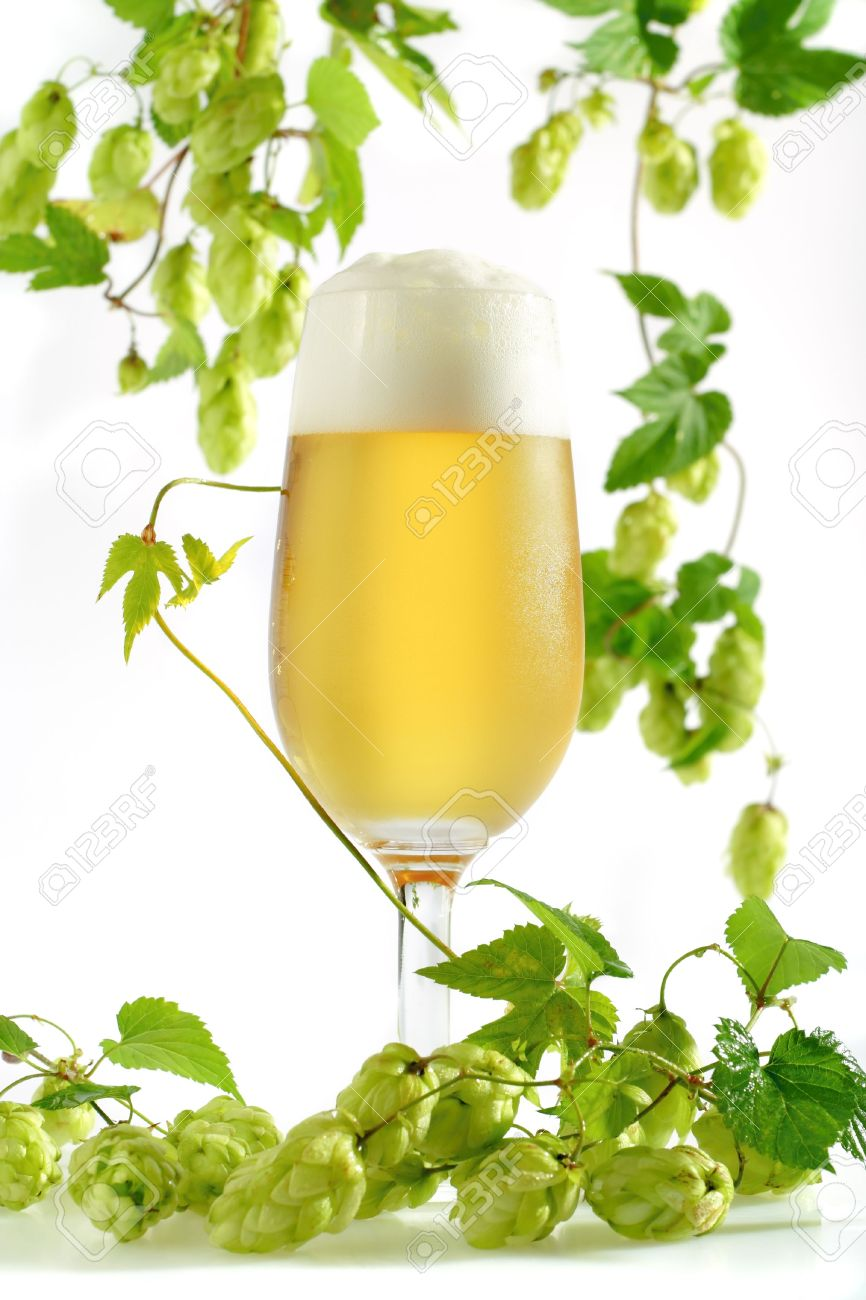 Beer With Foam In Glass With Wild Hop Sprouts With Cones And.