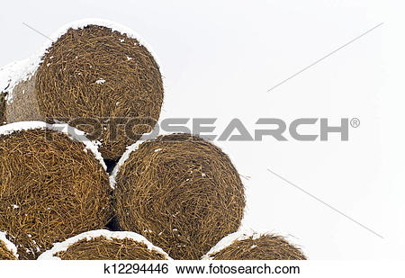 Stock Images of Straw Fodder Bales in Winter k12294446.