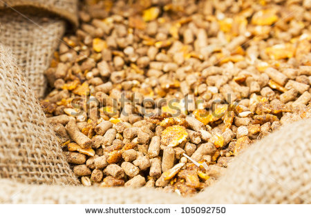 Cattle Feed Stock Photos, Royalty.