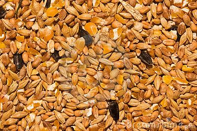Chicken Fodder Stock Image.