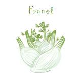 Foeniculum Stock Illustrations.