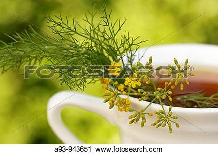 Stock Photography of Fennel infusion (Foeniculum vulgare) a93.