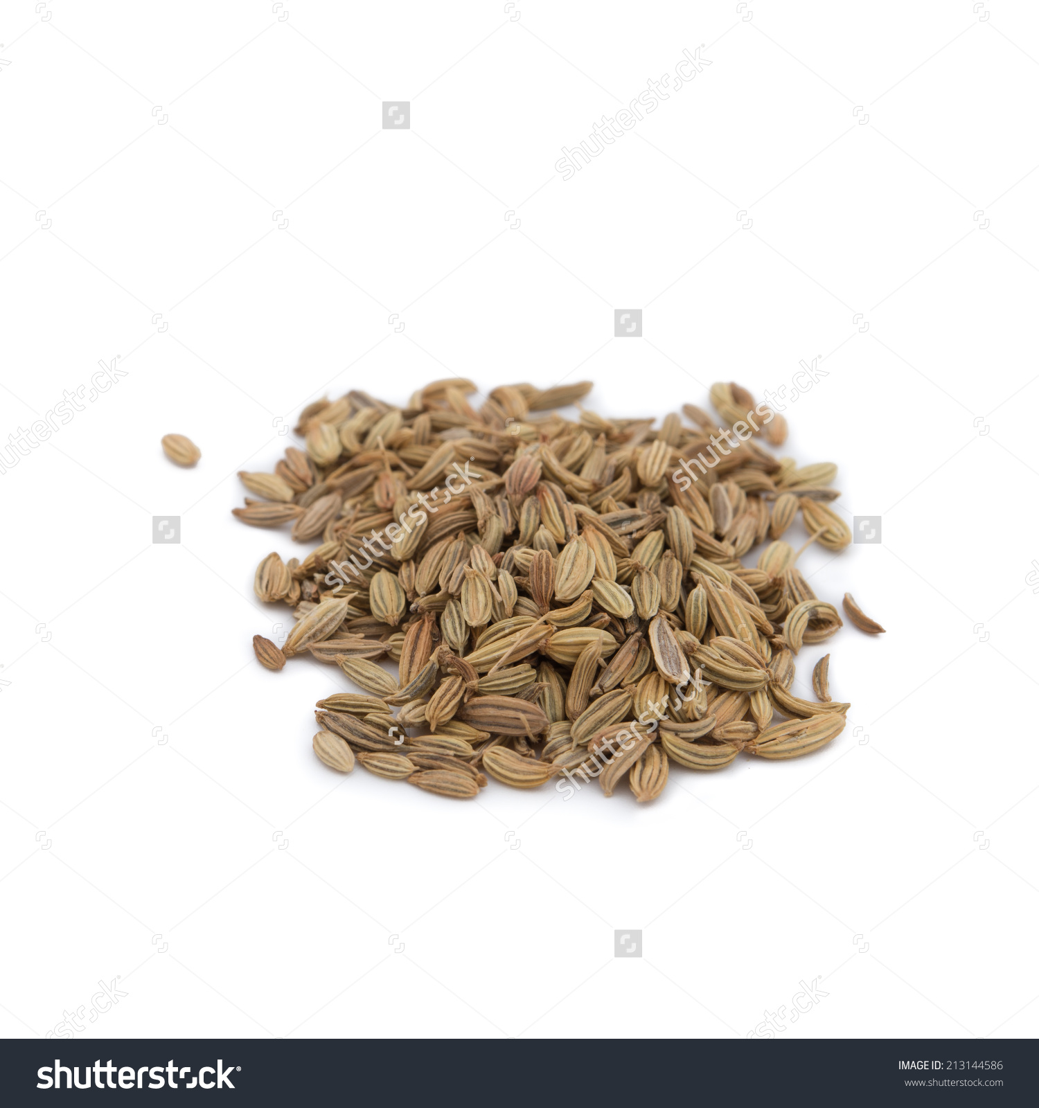 Dried Herbs,Fennel, Sweet Fennel, Foeniculum Vulgare Mill.[1.