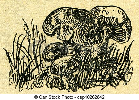 Drawing of Russula foetens commonly known as the stinking russula.